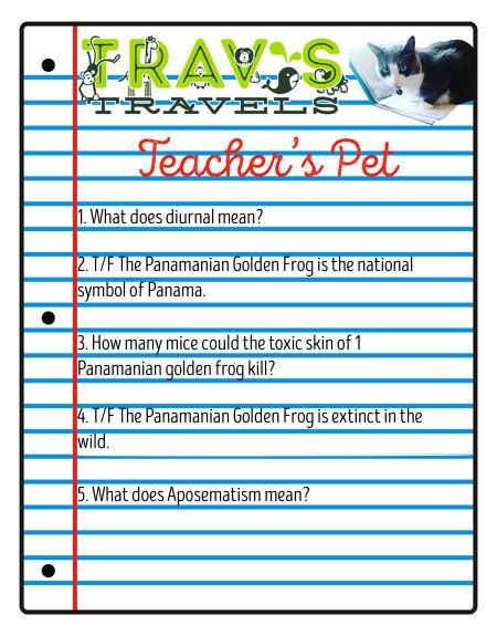 Teacher's Pet Panamanian Golden Frog.001