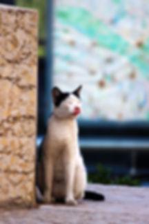 Valencia -Stray Cat