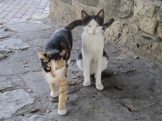 Paphos cats