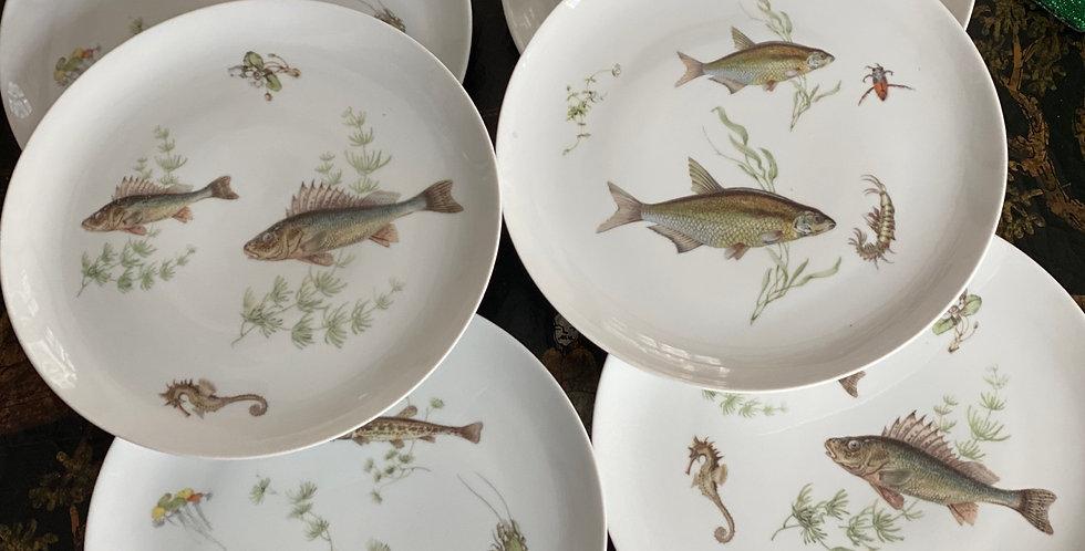 6 platos peces , porcelana KP , 25 cm