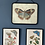 Thumbnail: Lámina de  mariposa con cadela