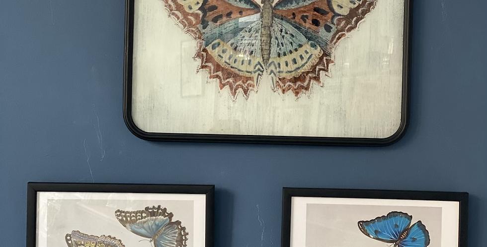 Lámina de  mariposa con cadela
