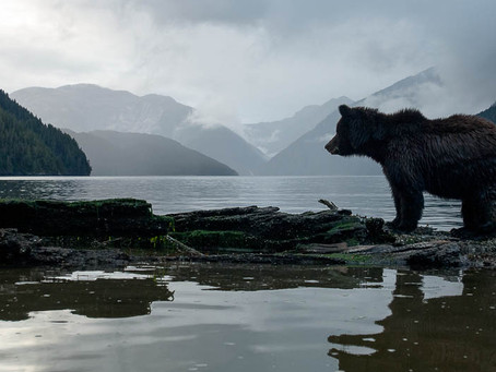Great Bear Rainforest joins The Queen's Commonwealth Canopy