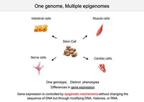 one%252520genome%252520multiple%252520phenotypes_edited_edited_edited.png