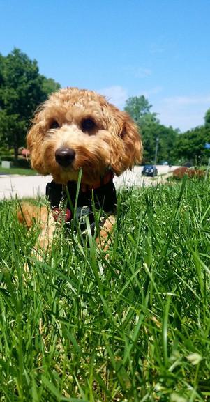 Pet Seasonal Allergies - Telltale Signs