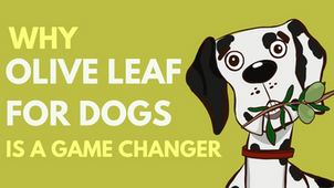Why Olive Leaf for Dogs is a Game  Changer