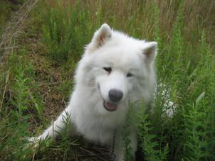Dr. Becker Discusses Ubiquinol for Pets