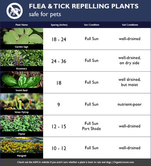 Plants that Repel Fleas & Ticks (Safe for Pets)