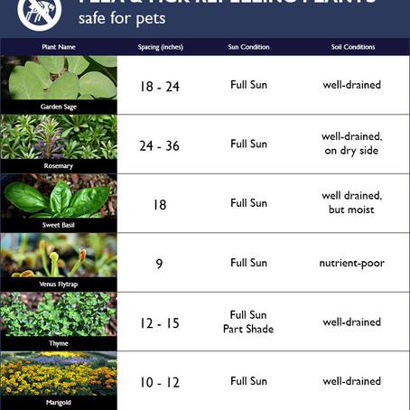 Plants that Repel Fleas & Ticks (Safe for Pets)