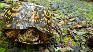 The Box Turtle: Things That Make You Go Hmmm