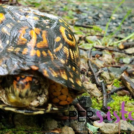 The Box Turtle: Things That Make You Go Hmmm