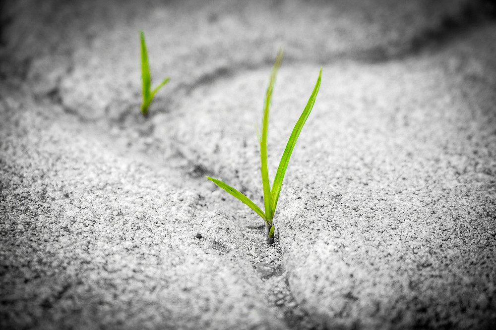 Grass growing in asphalt