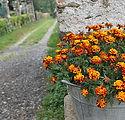 flowers-2904556_1920.jpg