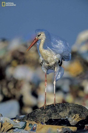 Protect the Environment from Plastic Bags, Wraps, and Films