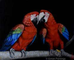 BIRDS' LOVE