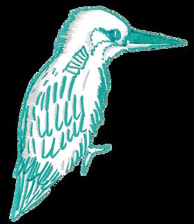 oiseau bleublanc