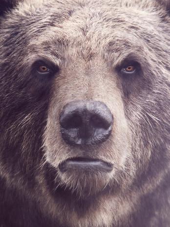 """Telus // Intense TV """"Bear"""""""
