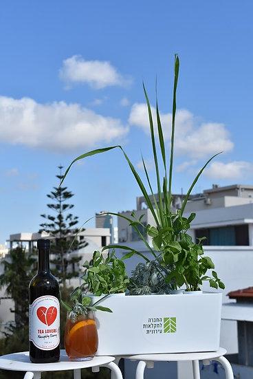 הידורטי -HydroTea - Grow Your Own Cocktail
