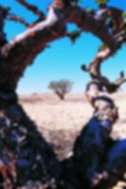 Oman_Terre_de_l'encens_3.jpg