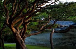 Sanctuaire de Jongmyo 2.jpg