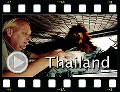 thailandkopie_laag.png