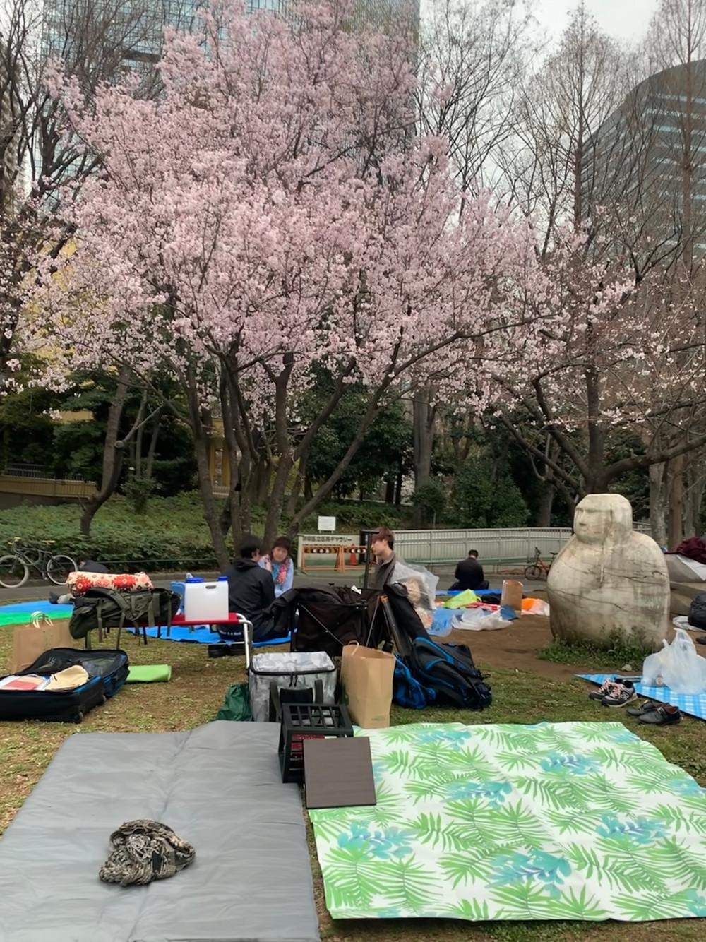 新宿中央公園 お花見