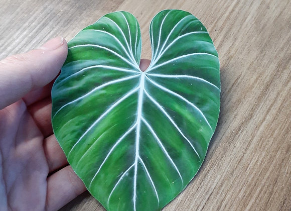Philodendron Gloriosum Magnet or Sticker