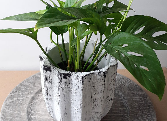 "5"" Lotus Cement Whitewash Pot"