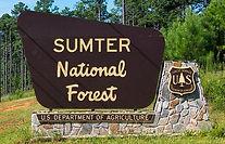 Sumter Forest.jpg
