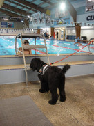cassi therapy puppy at pool