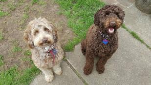 Rocky Creek Rosie with new buddy