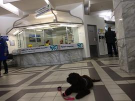 Juneau at Hospital visit.jpg