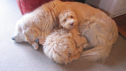 What a comfy pillow!