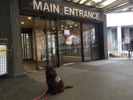 Juneau at Hospital entrance.jpg