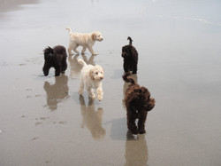 Therapy puppies at the beach
