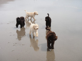 Therapy puppies at beach
