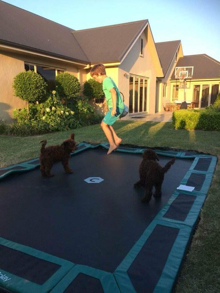 Therapy puppies on trampoline