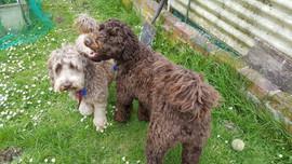 Rocky creek Rosie with new friend