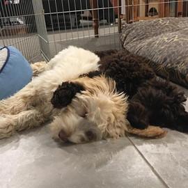 Harry and Juneau cuddling.jpg