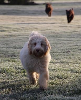 Harry running in frost.jpg