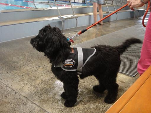 ziggy at the pools