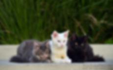 DAS_8916 P Face Kittens trio_edited.jpg