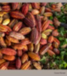 Cacap Harvest.png