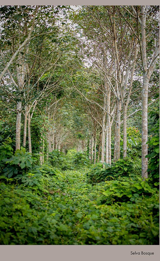 Selva Bosque.jpg