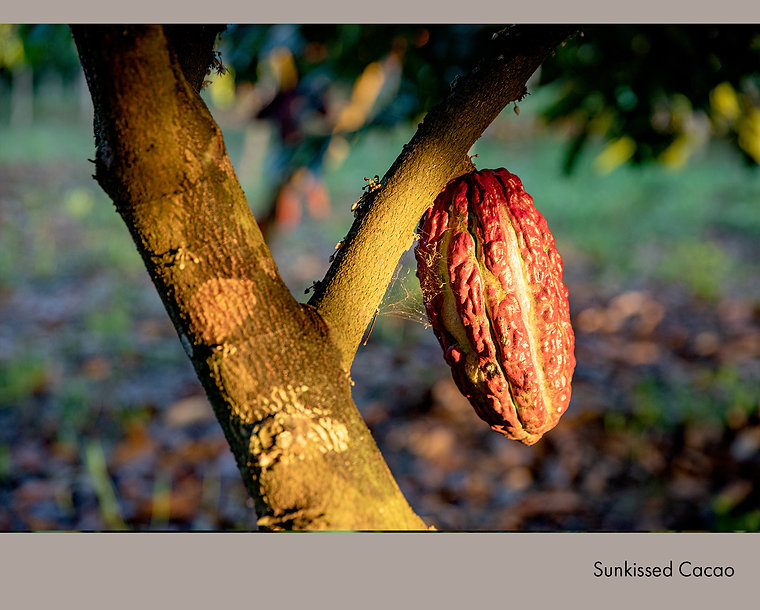 Sunkissed Cacao.jpg