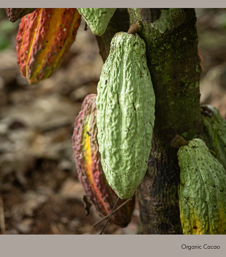Organic Cacao.png
