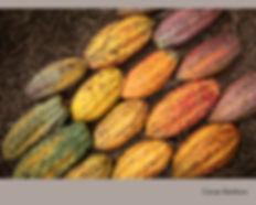 Cacao Rainbow_.jpg
