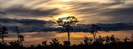 Tree silhoute with sunset moody clouds