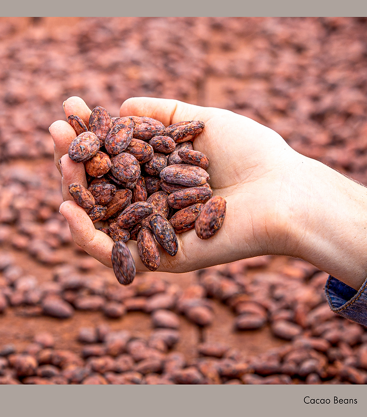 Cacao Beans.png