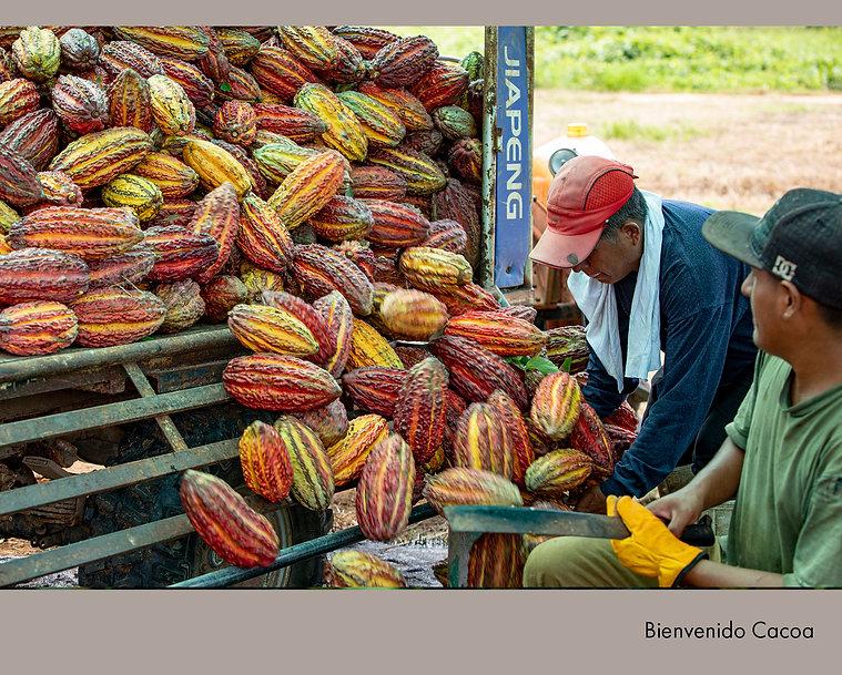 Bienvenido Cacao.jpg